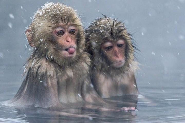 Красивые фото животных (4)