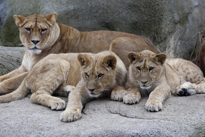 Красивые фото животных (15)