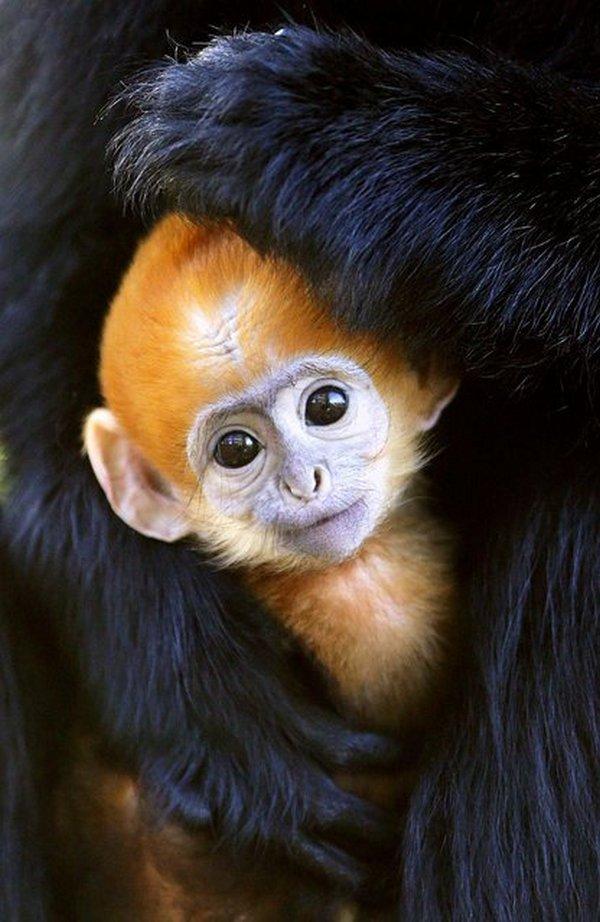 Красивые фото животных (10)