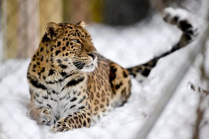 Красивые фото животных (6)