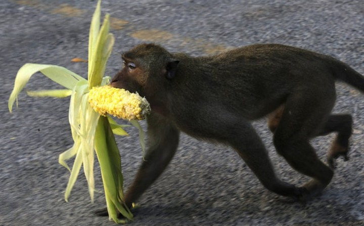 Красивые фото животных (20)