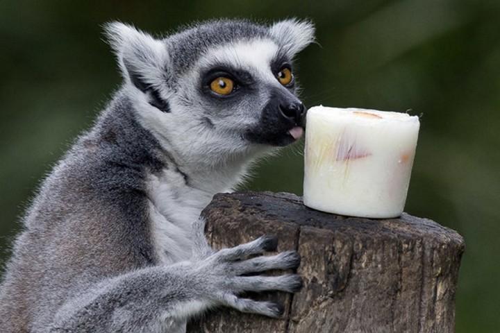 Красивые фото животных (14)