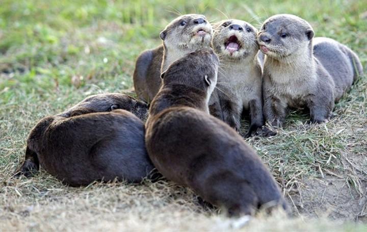 Красивые фото животных (11)