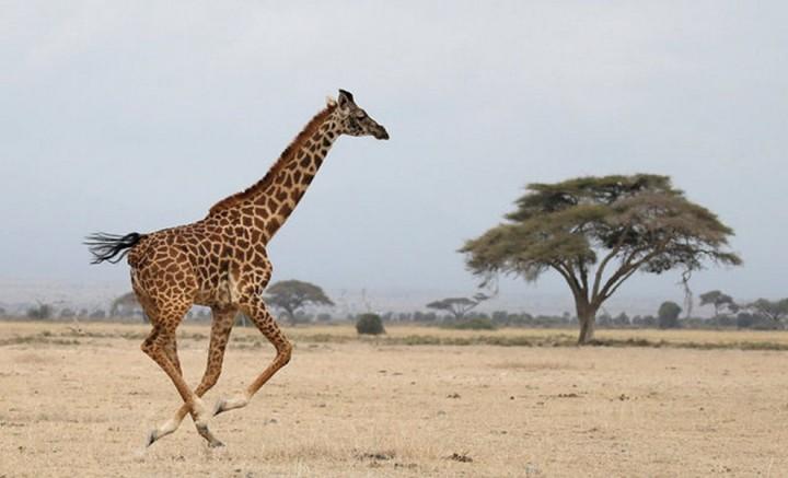 Красивые фото животных (17)