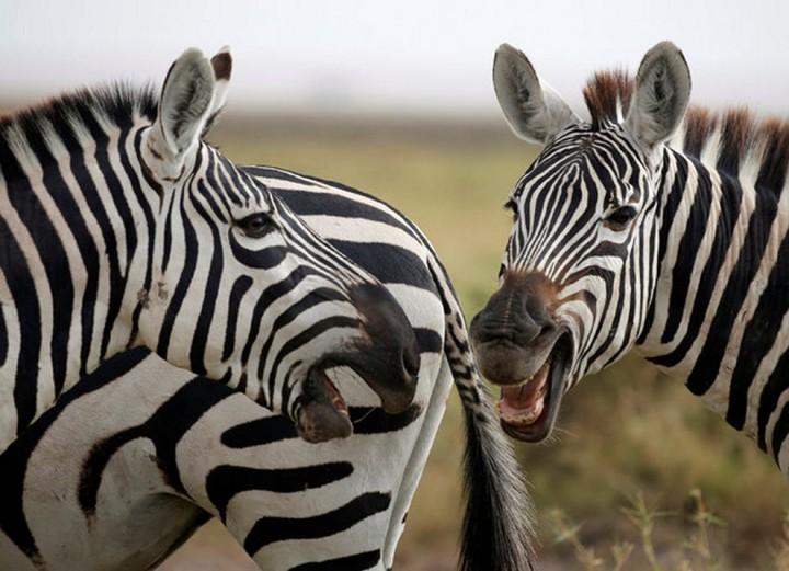 Красивые фото животных (16)