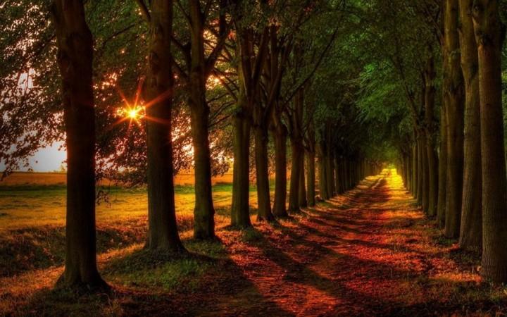 природа, красивые фото природы, фотопейзажи, осень (7)
