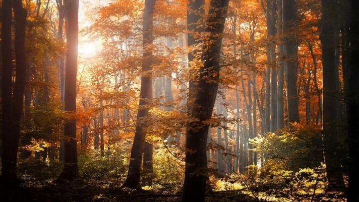 природа, красивые фото природы, фотопейзажи, осень (24)