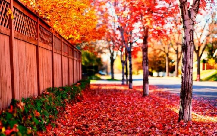 природа, красивые фото природы, фотопейзажи, осень (1)