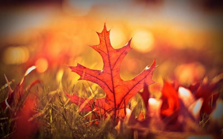 природа, красивые фото природы, фотопейзажи, осень (22)