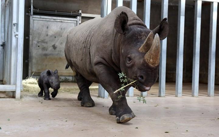 Фото, животные, Красивые фото животных (7)