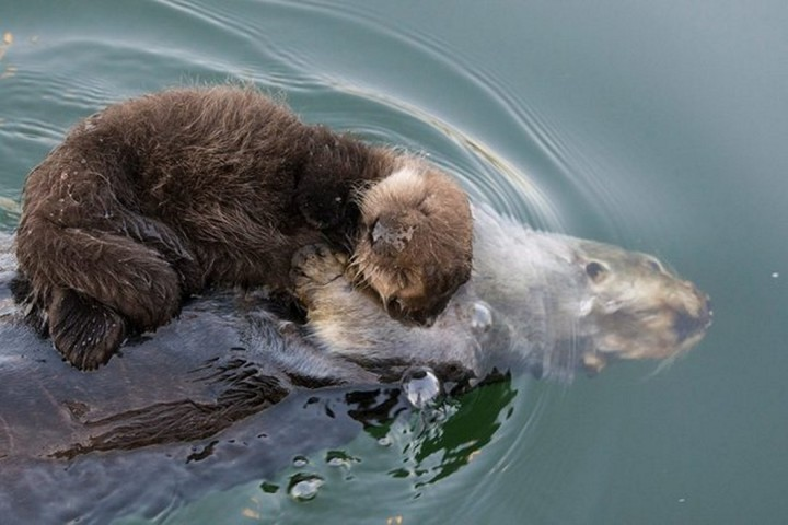 Фото, животные, Красивые фото животных (15)
