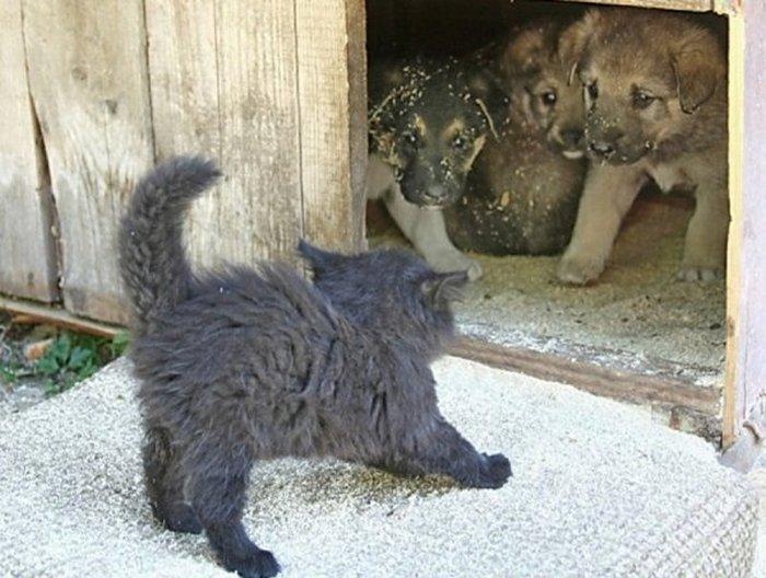 Фото, животные, Красивые фото животных (11)