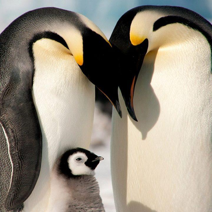 Фото, животные, красивые фото животных (1)