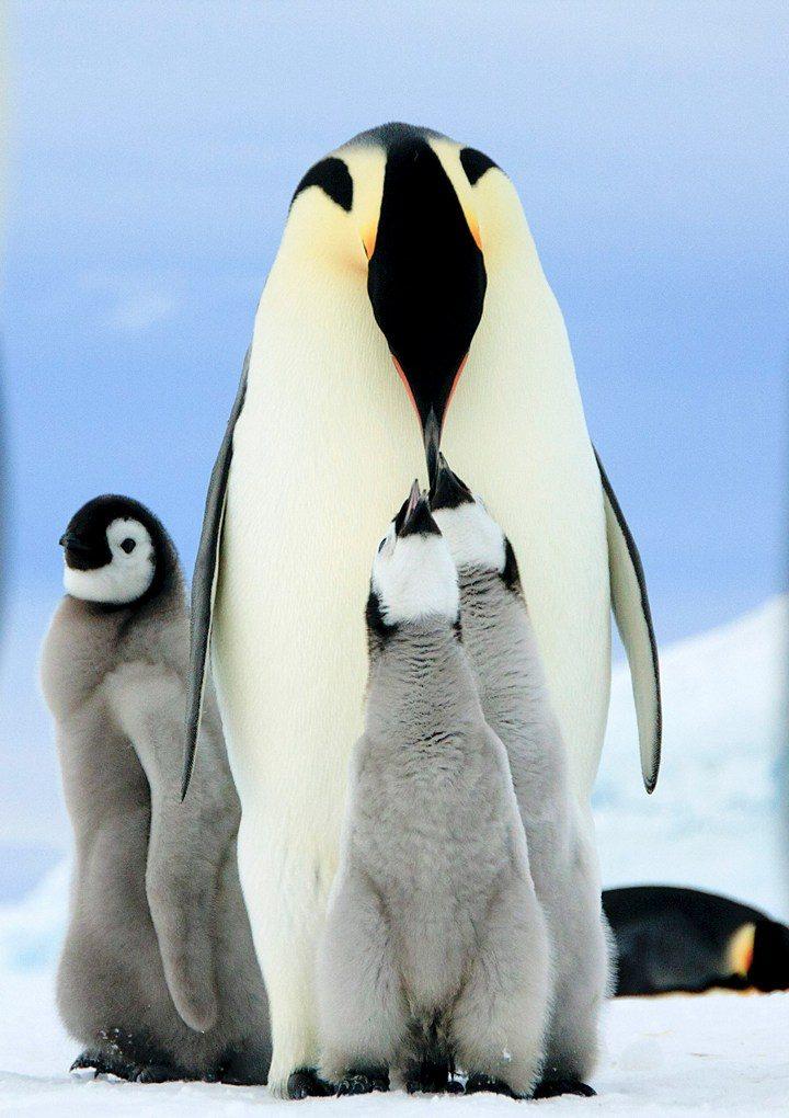 Фото, животные, красивые фото животных (3)