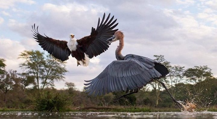 птицы (13)