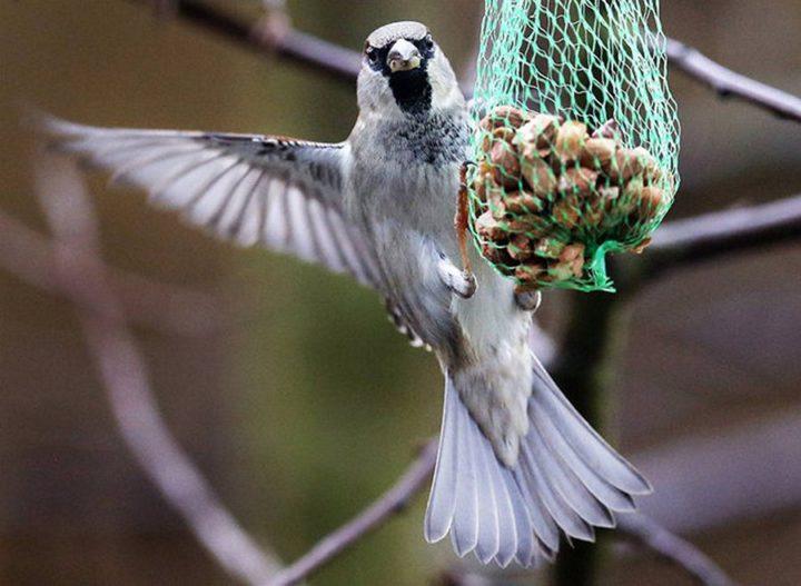 птицы (11)
