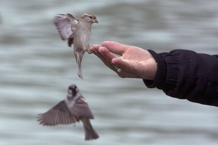 птицы (1)