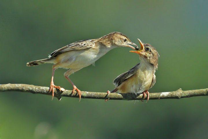 птицы (10)