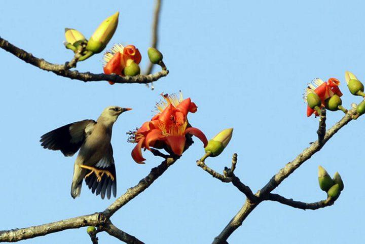 птицы (9)