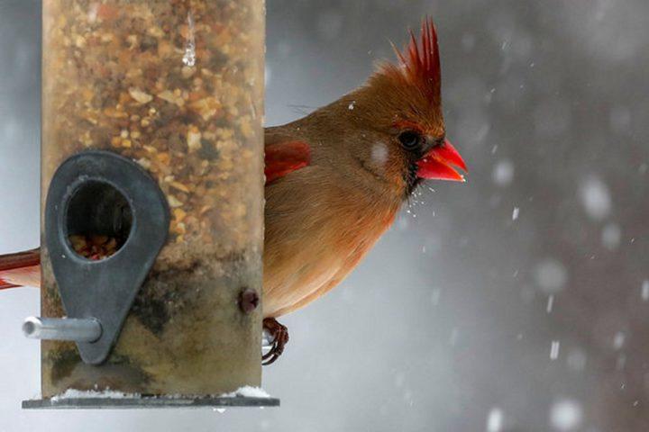 птицы (17)