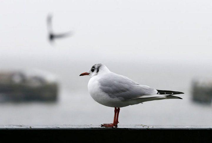 птицы (5)
