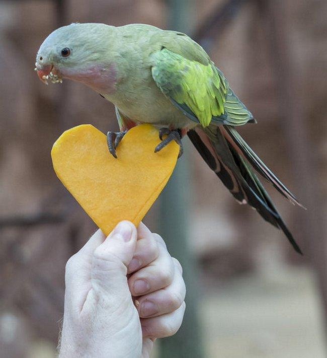 птицы (8)