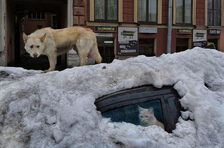 фото, Россия (10)