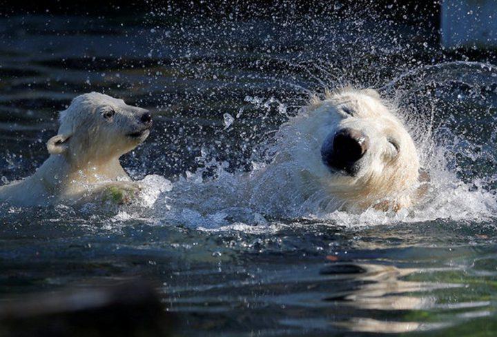 Фото, животные, Красивые фото животных (16)