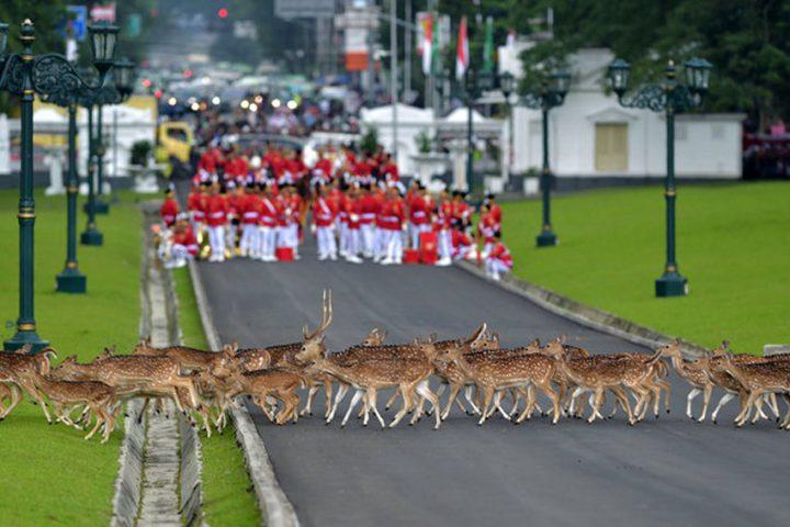 Фото, животные, Красивые фото животных (5)
