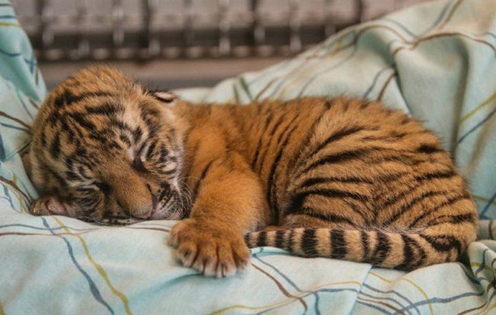 Фото, животные, Красивые фото животных (4)